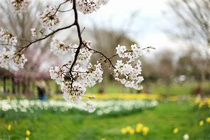 Spring Season Nature Flowers Parks Wallpapers Sciences