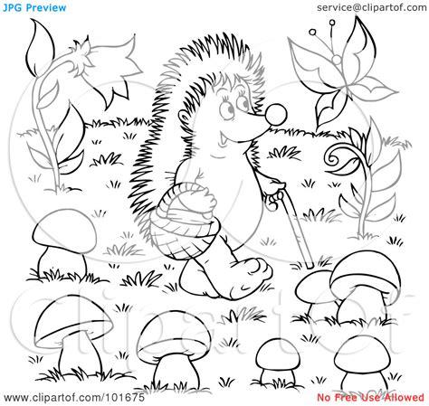 hedgehog coloring pages    print