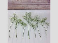 How much baby's breath do I need?