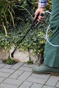Unkraut Auf Gehwegen Dauerhaft Entfernen : unkraut im garten vorbeugen tolerieren entfernen ~ Michelbontemps.com Haus und Dekorationen