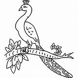 Peacock Drawing Branch Sketch Coloring Pages Easy Bird Sitting Draw Printable Children Birds Getdrawings Sketches Nice sketch template