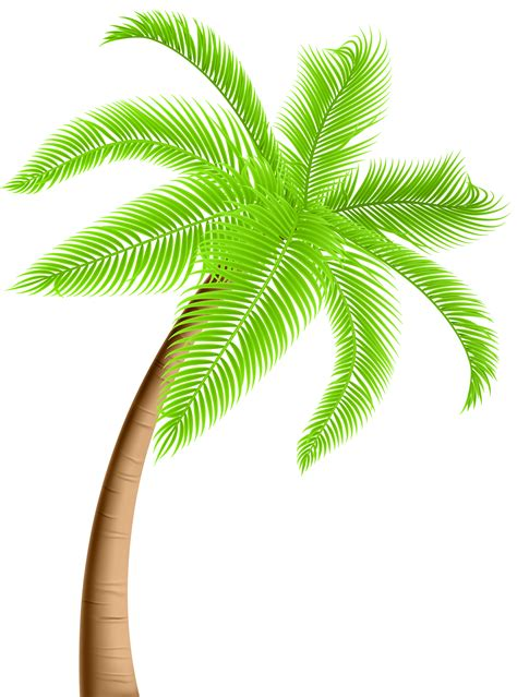 palm tree png clip art gallery yopriceville high quality images
