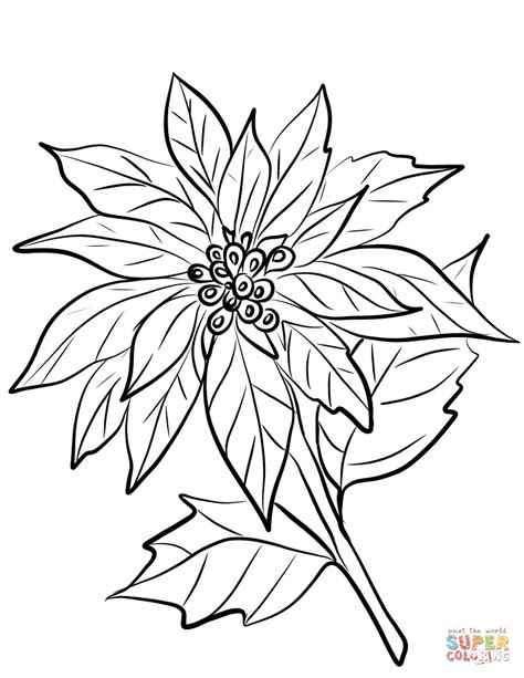 christmas poinsettia drawing    clipartmag