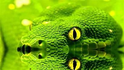 Snake Snakes Animated Desktop Screensaver Moving Pc