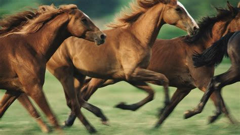 horses run fast reference animals
