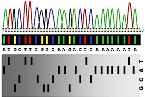 sequenziamento illumina dodona sanger sequencing