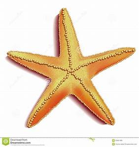 Image Gallery starfish vector