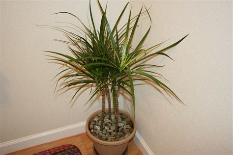 indoor plants low maintenance top 10 tropical house plants any one can grow the self