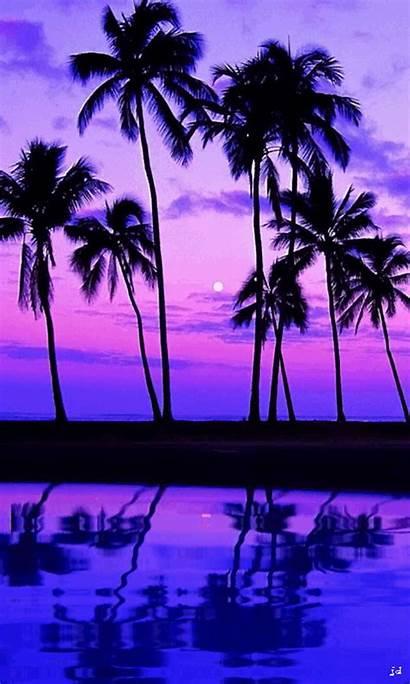 Tropical Night Papel Parede Roxo Iphone Descubra