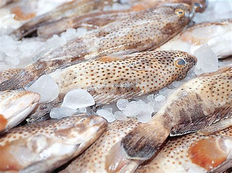 fish uae hammour species gulf study shows three sold severely overexploited stocks credit
