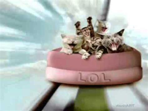 happy birthday funny cats style  happy birthday ecards