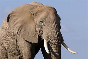 Echo: An Elephant to Remember | Photos: Echo and Her ...