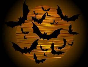Bats Flying At Dusk