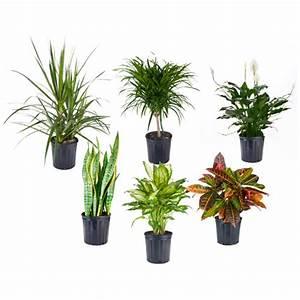 Plante Tropicale D Intérieur : plante tropicale rona ~ Melissatoandfro.com Idées de Décoration