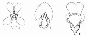 Zygomorphic - Virtual Herbarium