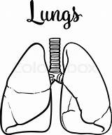 Lungs Lung Vector Sketch Drawn Drawing Human Healthy Clipart Realistic Illustration Person Isolated Tuberculosis Getdrawings Clipartmag Clean Asthma Anatomy Colourbox sketch template