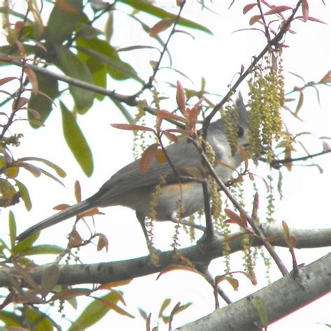 tree central florida native plant sale march 31 april 2