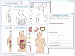 Label Ideas 2020  32 Label The Digestive System Worksheet