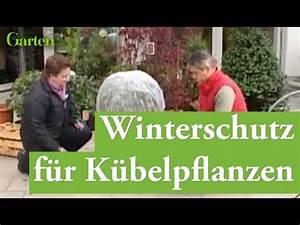 Winterschutz Für Kübelpflanzen : pflanzenschutz winterschutz f r frostharte k belpflanzen youtube ~ Avissmed.com Haus und Dekorationen