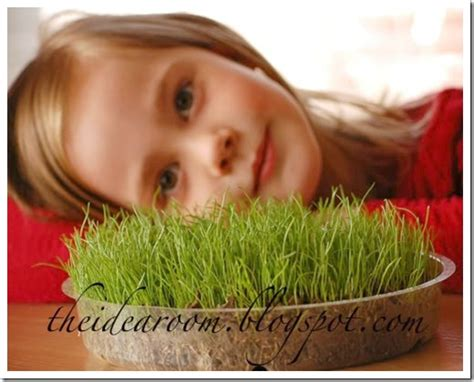 grow real easter basket grass  idea room