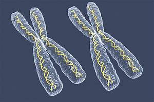 When Extra X Chromosome Won U0026 39 T Stay Silent  Rogue Rna May Be To Blame