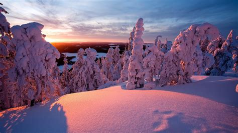 snow covered trees wallpapers hd wallpapers id