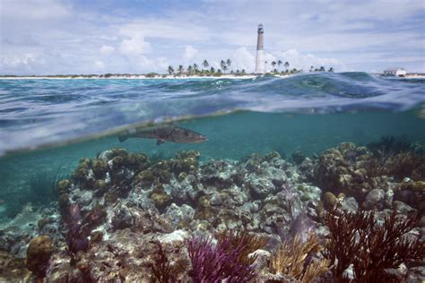 How Tourism Can Be Good For Coral Reefs