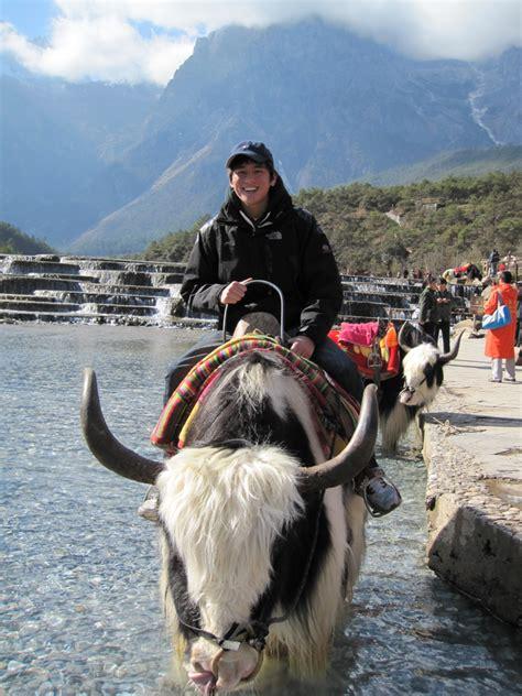 exotic animals   ride  horses