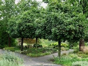 Kleine Laubbäume Für Den Garten : hausb ume f r kleine g rten mein sch ner garten ~ Michelbontemps.com Haus und Dekorationen