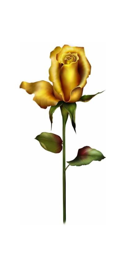Rose Bud Yellow Clipart Roses Clip Transparent
