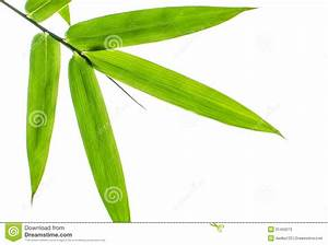 Bamboo Leaf Clipart - Clipart Suggest