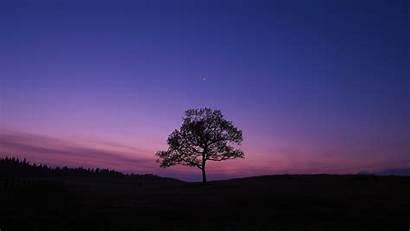 Sky Purple Nature Dark Tree Wallpapers Laptop