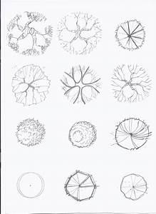 Tree Plan Drawing At Getdrawings