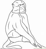 Baboon Coloring Pages Baboons Coloringpages101 Template Sketch Results sketch template