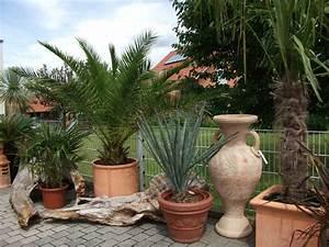 Mediterrane Gärten Bilder : frank m braunecker stein dekorativ 67482 freimersheim gartengestaltung mediterrane pflanzen ~ Orissabook.com Haus und Dekorationen