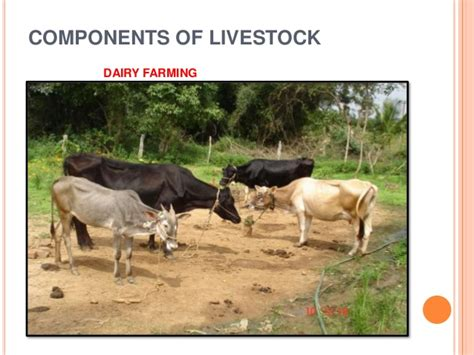 inter relationship  crop  animal production systems