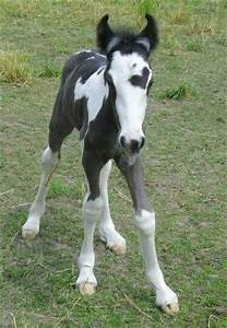 Foal with heart! | so cute baby horses | Pinterest