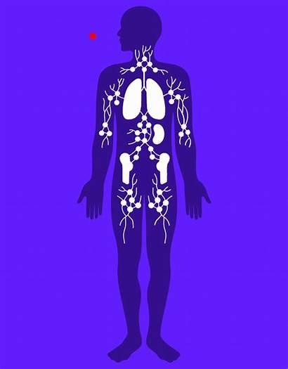 System Immune Coronavirus Hacks Human Virus Immunity