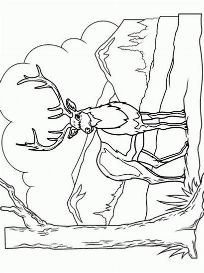 Deer Coloring Pages Animal Animals Printable Recommended