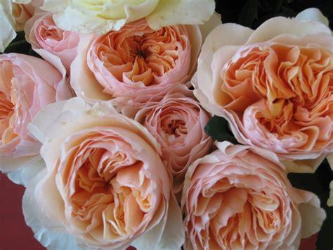 david garden roses inspiration for sugar flowers by minetterushing on pinterest ranunculus garden roses and tulip