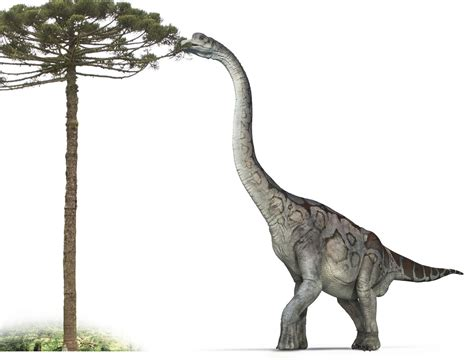 Brachiosaurus History And Some Interesting Facts