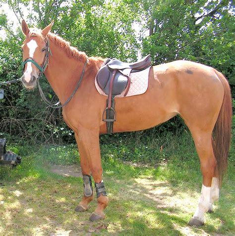 comment monter a cheval les chevaux