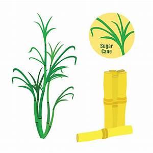 Sugarcane Clipart - ClipArt Best