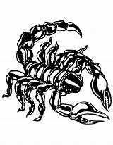 Scorpion Coloring Pages Print Printable Drawing Shells Getcoloringpages Colors Beach Desert Animal sketch template
