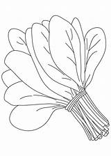 Spinach Clipart Vegetable Drawing Vegetables Coloring Pages Colouring Drawings Station Leaf Paintingvalley Clipartix Tomato Fruit Veg Sheets sketch template