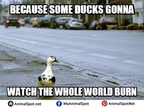 Duck Hunting Meme - duck hunting memes 28 images goose hunting meme images reverse search duck hunting memes 28