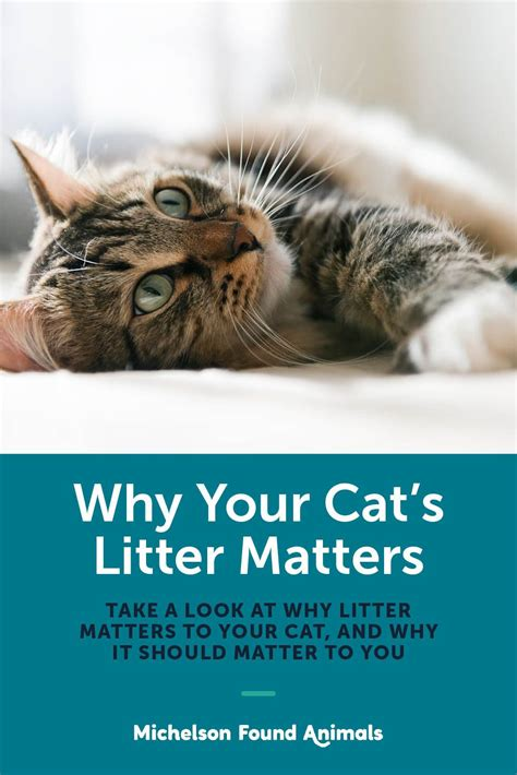 litter why cat cats matters foundanimals should