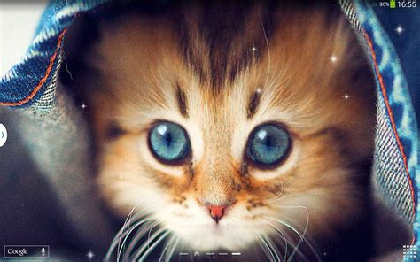 Cute Cats Live Wallpaper  Android Apps On Google Play