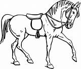 Outline Horse Saddle Drawing Horsemanship Horses Line Mount Coloring Pages Burden Getdrawings Pixcove Mammal Creature Contour Physical Sculpture Stone Animal sketch template