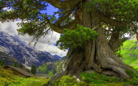 fondo pantalla paisaje arbol  montana